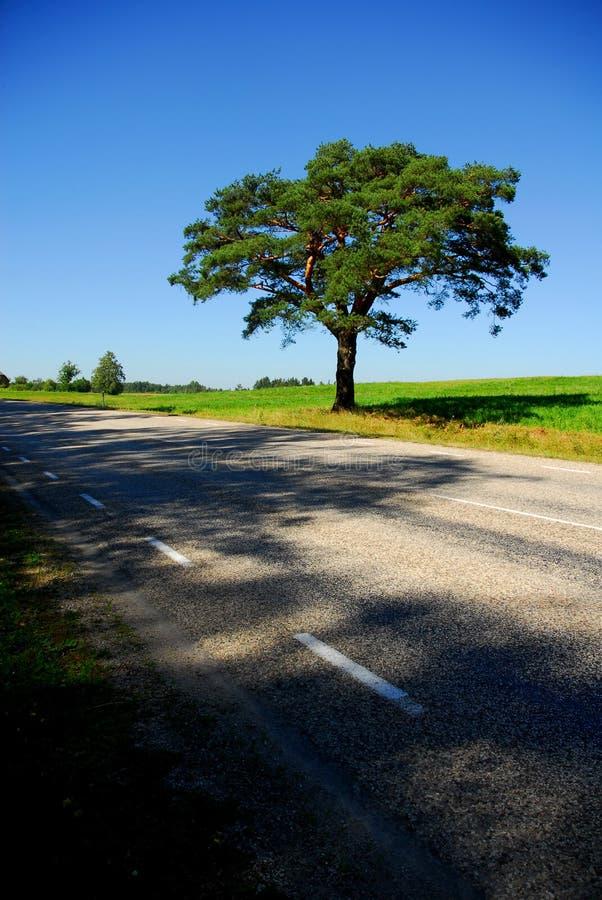 Singolo albero dalla strada fotografia stock libera da diritti