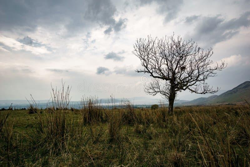 Singolo albero davanti a Loch Lomond immagini stock libere da diritti