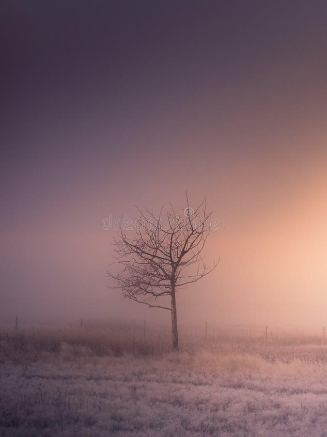 Singolo albero durante l'alba nebbiosa immagini stock libere da diritti