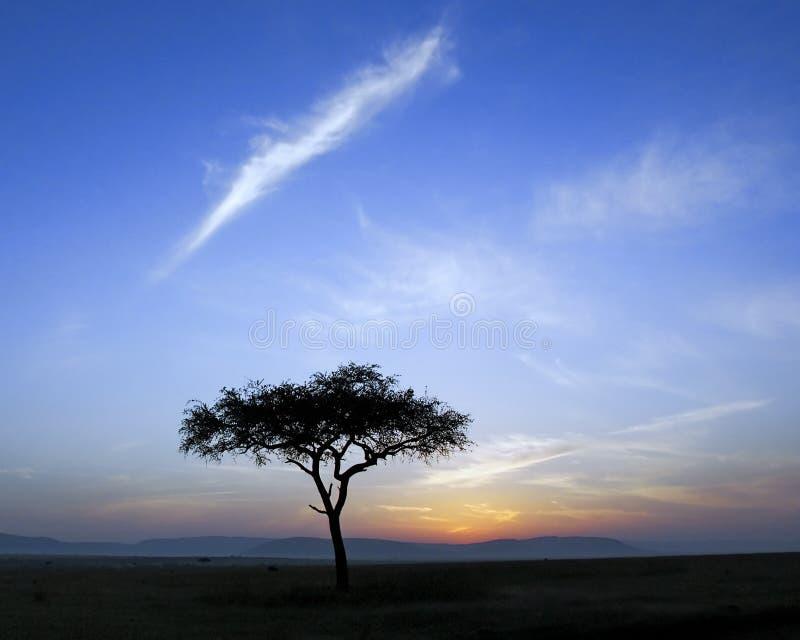 Singolo albero ed alba dell'acacia immagini stock libere da diritti