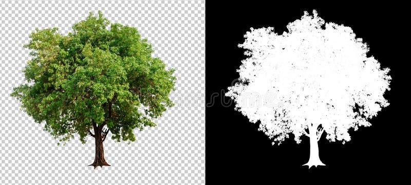 singolo albero sul fondo trasparente dell'immagine immagini stock
