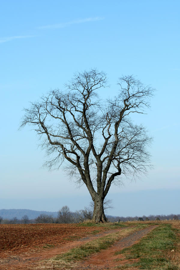 Singolo albero in un campo immagine stock
