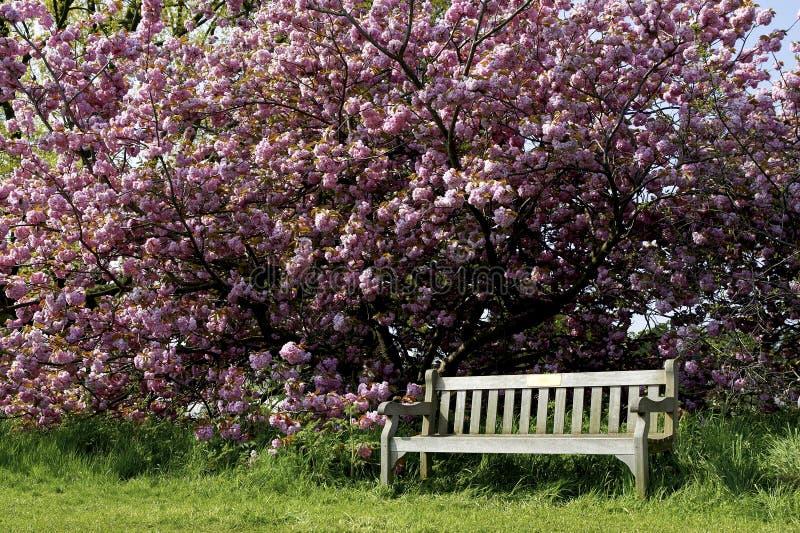 Download Singolo Banco Di Sosta Vuoto Fotografia Stock - Immagine di fiore, nessuno: 203520