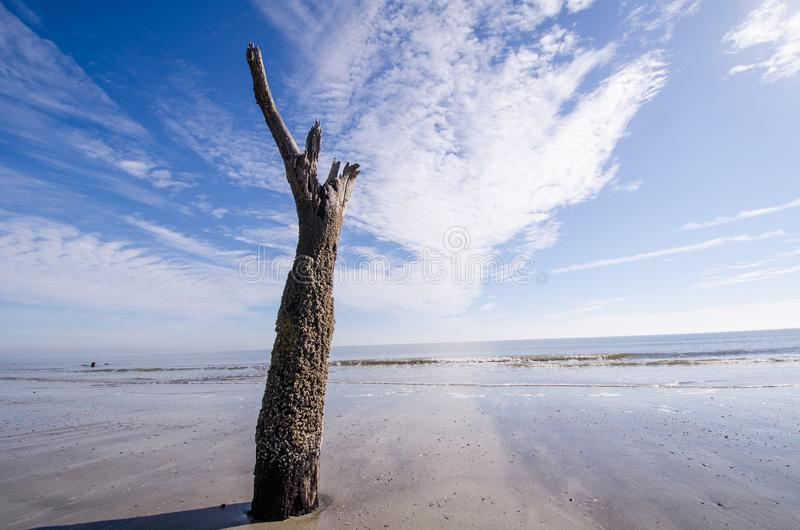 Singolo ceppo di albero lungo la spiaggia fotografie stock libere da diritti