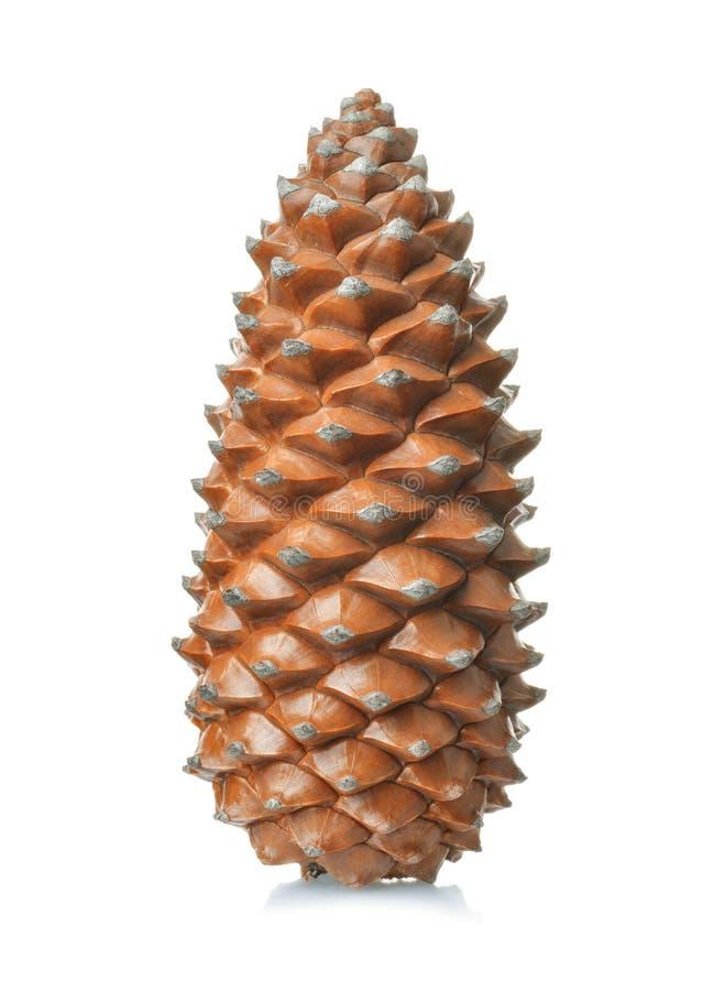 Singolo cono del pino immagini stock