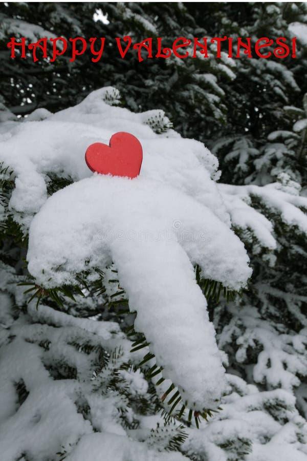 Singolo cuore rosso luminoso dei biglietti di S. Valentino su un ramo di albero caricato neve dell'abete balsamico con i bigliett immagine stock libera da diritti