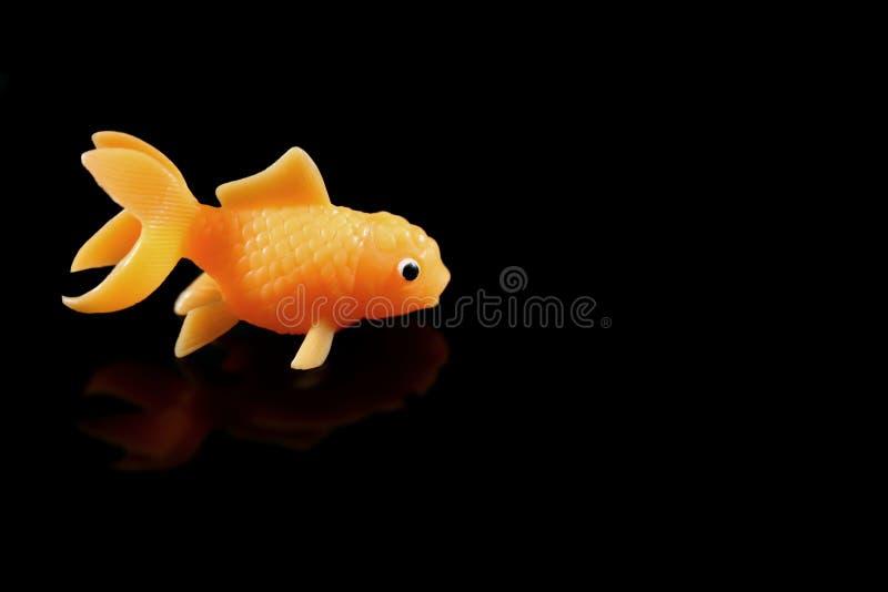 Singolo goldfish immagini stock libere da diritti