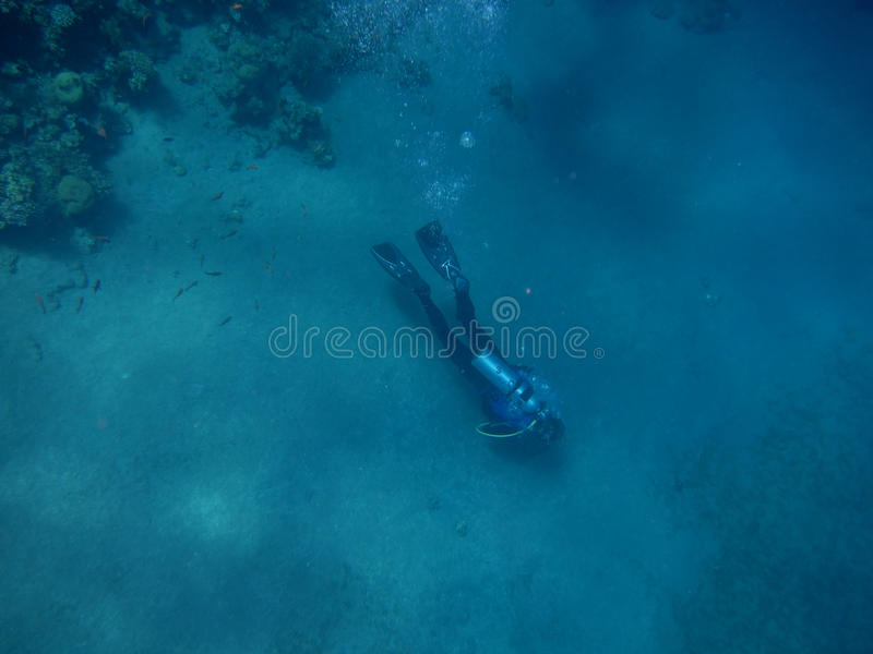 Singolo operatore subacqueo fotografia stock libera da diritti