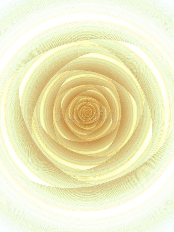 Singolo reticolo aperto bianco della Rosa fotografia stock