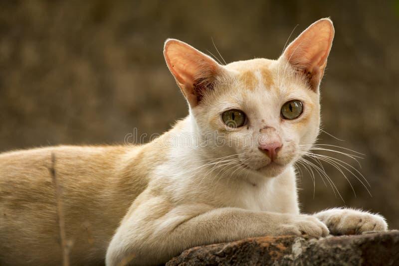 Singolo sguardo del gatto fotografie stock libere da diritti