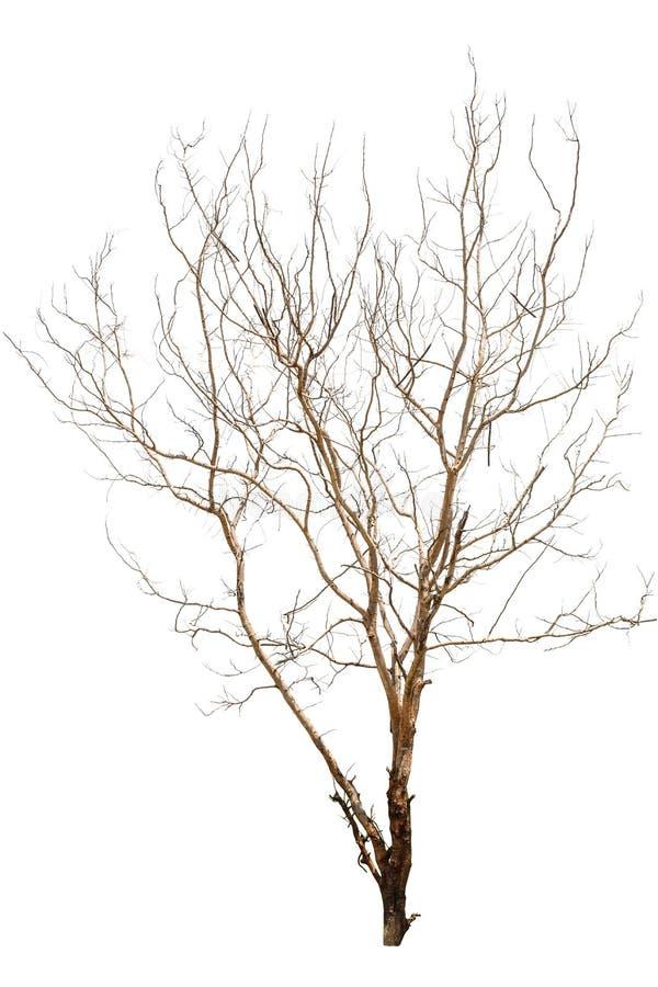 Singolo vecchio ed albero guasto immagine stock