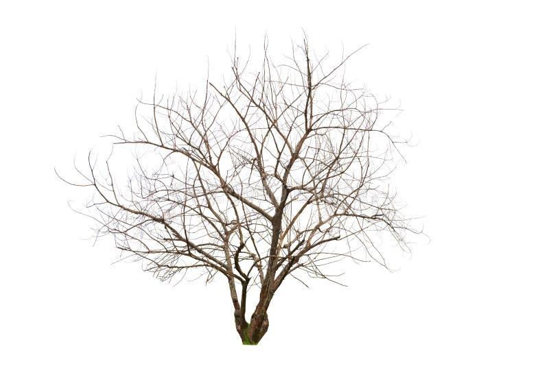 Singolo vecchio ed albero guasto fotografie stock