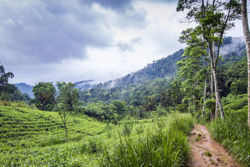 Sinharaja Forest Reserve, Sri Lanka royaltyfri bild