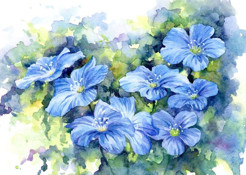 Sinii flowers, watercolor. royalty free illustration