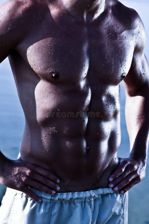 sinnlig torso för male muscule fotografering för bildbyråer