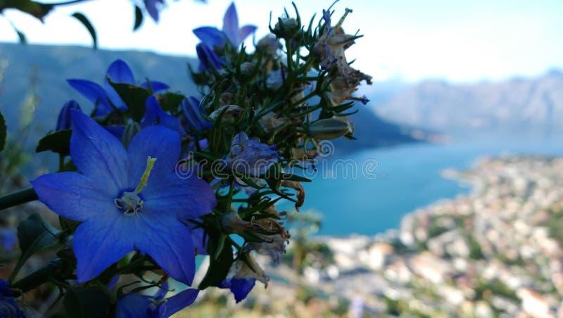 Sino minguante da flor na montanha e uma vista da baía de Kotor em Montenegro outono nos Balcãs imagem de stock royalty free
