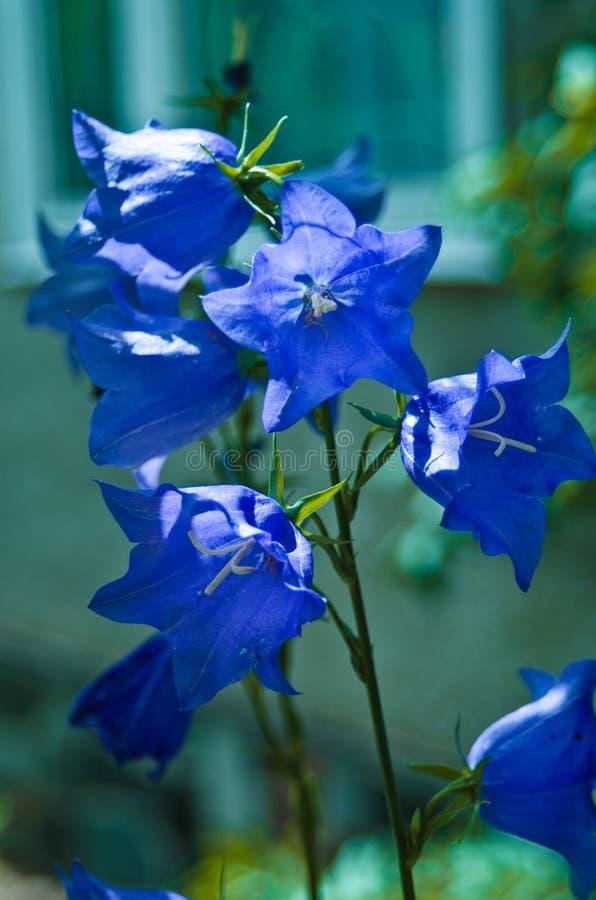 Sinos azuis fotografia de stock