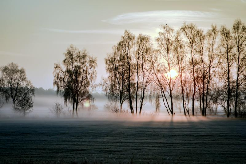 Night frost and fog over the fields. stock photos