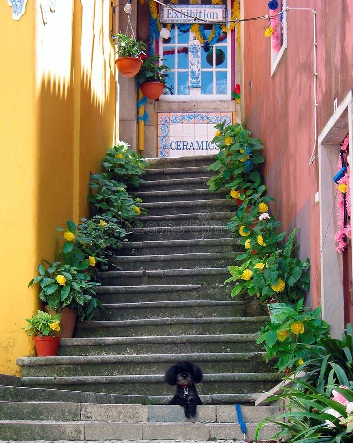 Sintra Steps stock photos