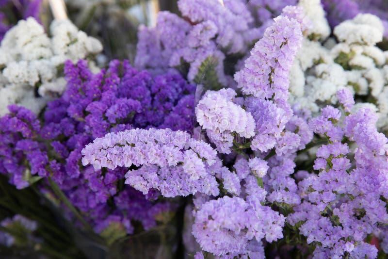 Sinuatum bonito do limonium, pequenos flores da s?rie do ramalhete em cores lil?s, violetas imagens de stock royalty free