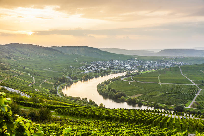Sinuosidade famosa de Moselle com vinhedos foto de stock royalty free