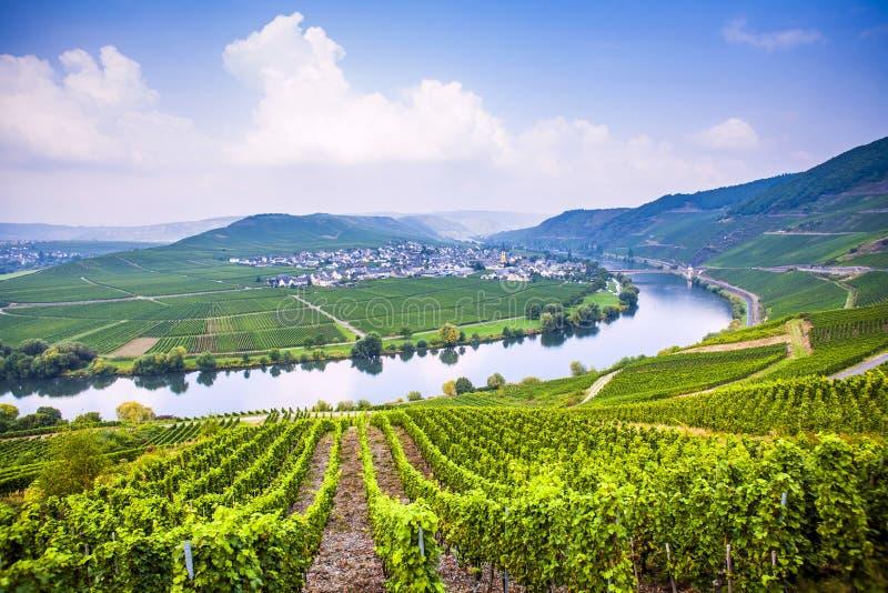 Sinuosité célèbre de la Moselle avec des vignobles photos stock