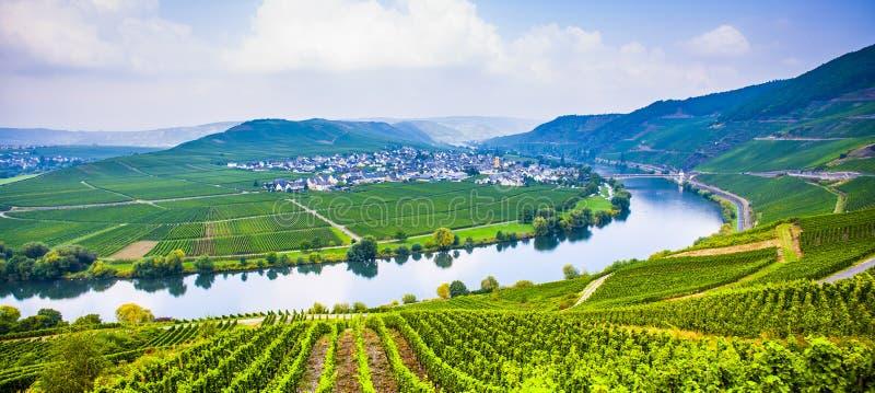 Sinuosité célèbre de la Moselle avec des vignobles près de Trittenheim image stock