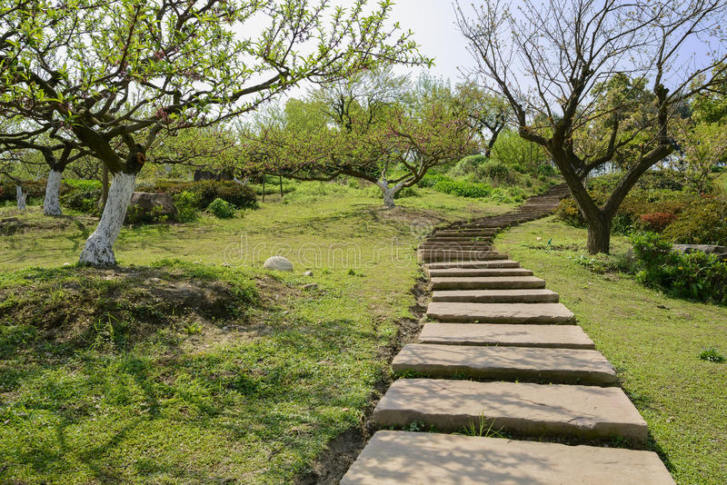 Sinuous hillside flagstone path in spring orchard at sunny noon. Chengdu,China stock photos