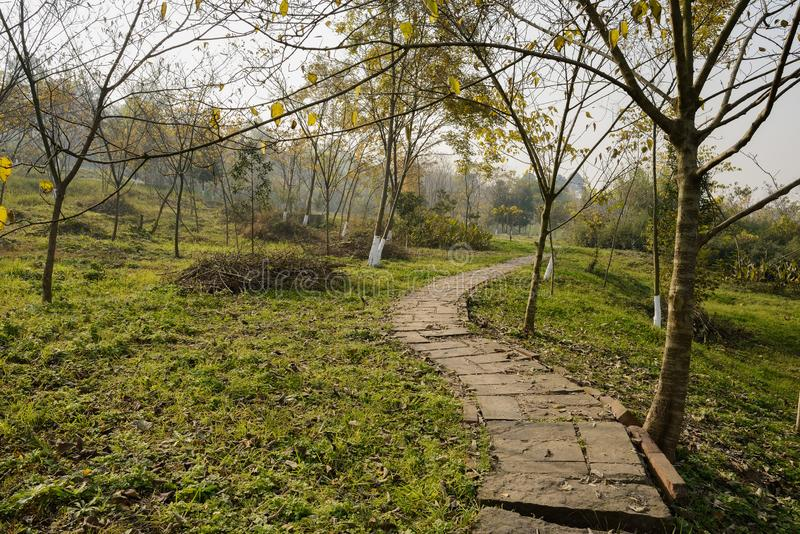 Sinuous hillside stone path in plants of sunny winter morning royalty free stock image