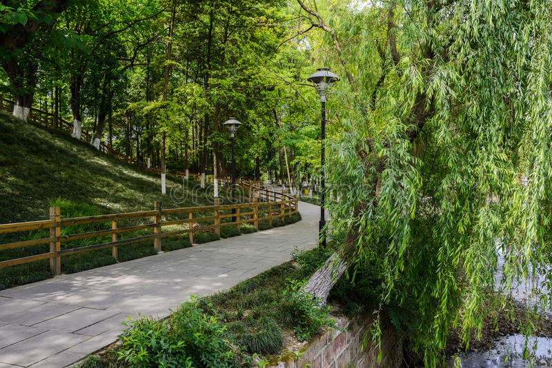 Sinuous path in verdant spring stock image