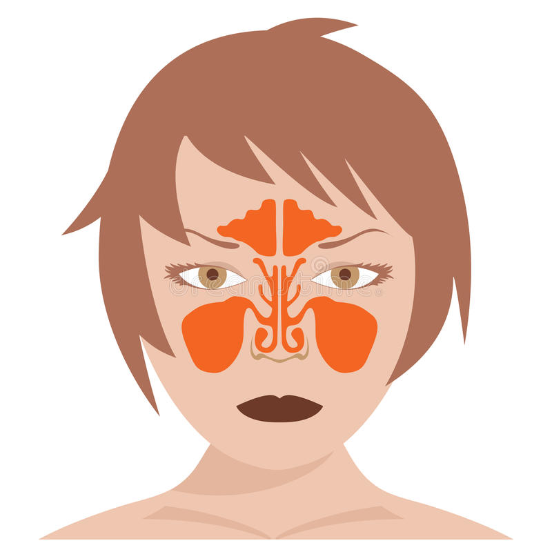 Sinus nasal et frontal illustration stock