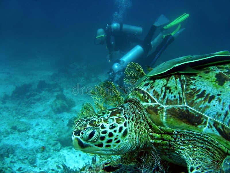 sipadan προσοχή χελωνών του Μπόρν στοκ εικόνες με δικαίωμα ελεύθερης χρήσης