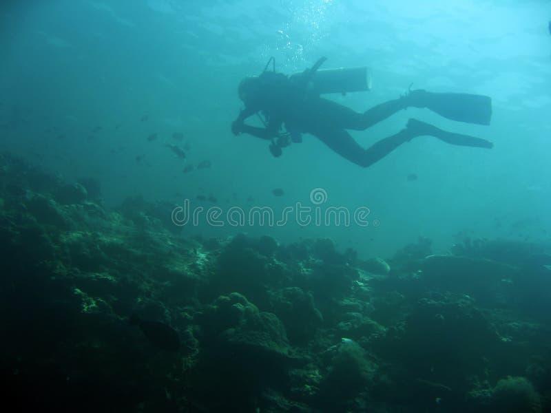 sipadan vägg för dykarerevscuba royaltyfria foton