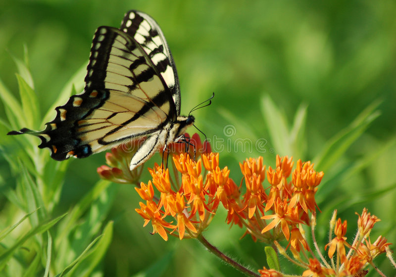 Sipping Nectar royalty free stock photography