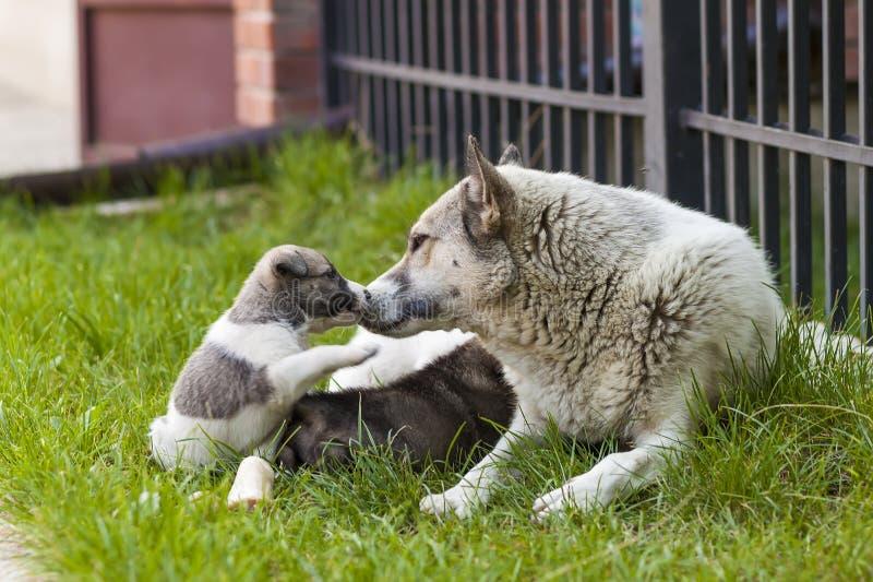 Sira de mãe ao cão com cachorrinhos do bebê, cachorrinho bonito de A, um cão, cão - foco imagens de stock royalty free