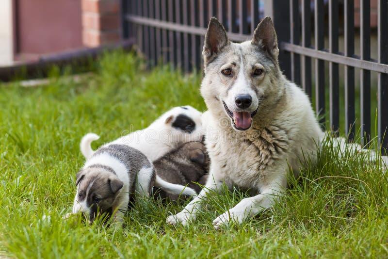 Sira de mãe ao cão com cachorrinhos do bebê, cachorrinho bonito de A, um cão, cão - foco imagem de stock royalty free