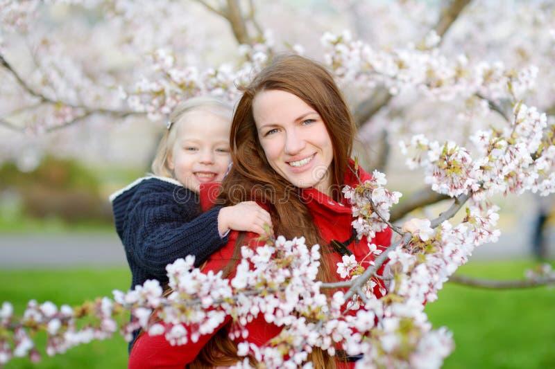 Sira de mãe e sua criança no jardim de florescência da cereja imagem de stock royalty free