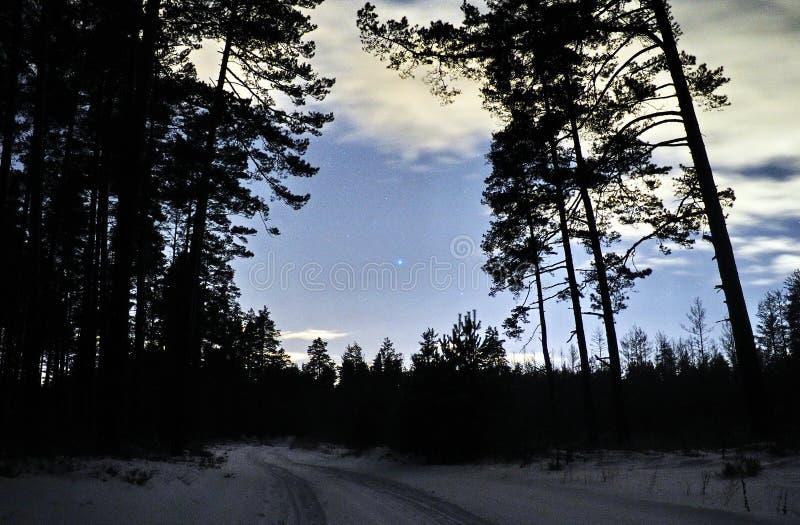 Sirius-Stern auf nächtlichem Himmel und Schnee im Winterwald stockbild