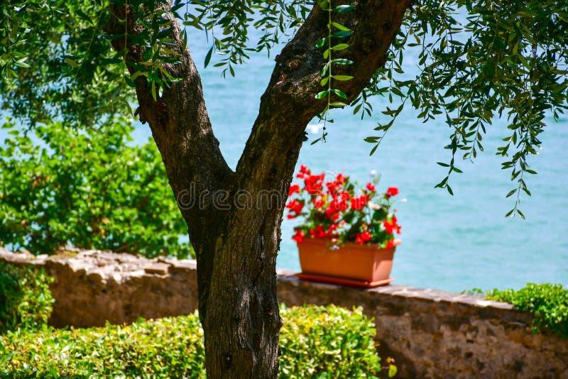 Sirmione on Garda lake Lago di Garda, Italy. Flowers  near the sea stock photos