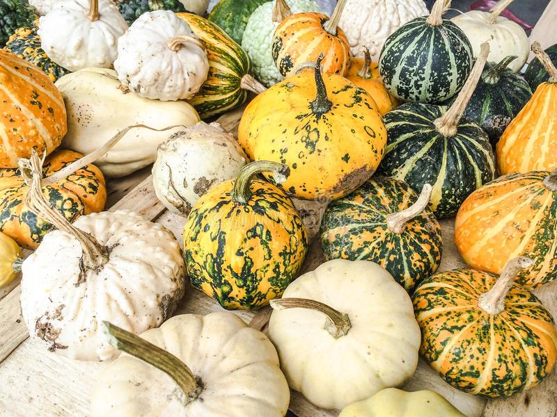 Sirops et courges image stock