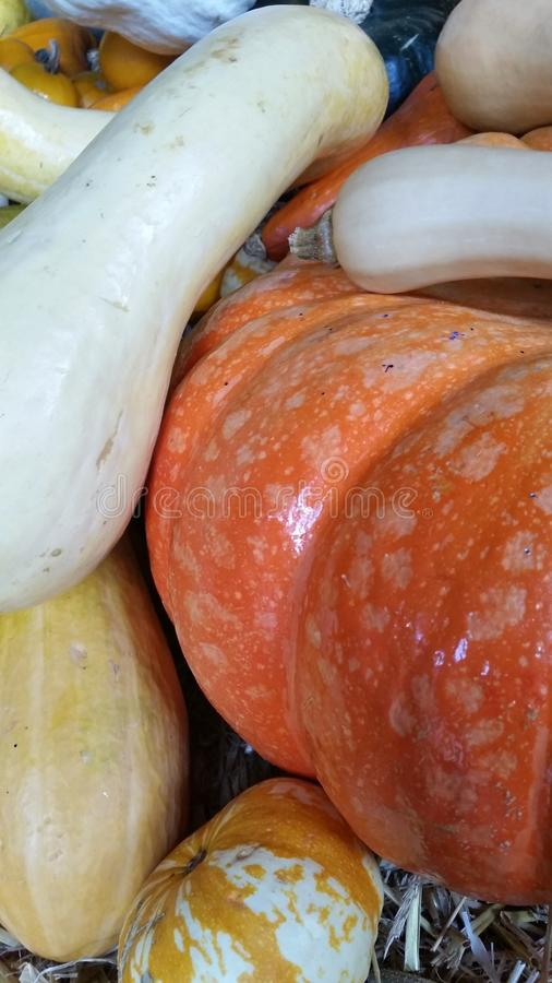 Sirops, potirons et courges image stock