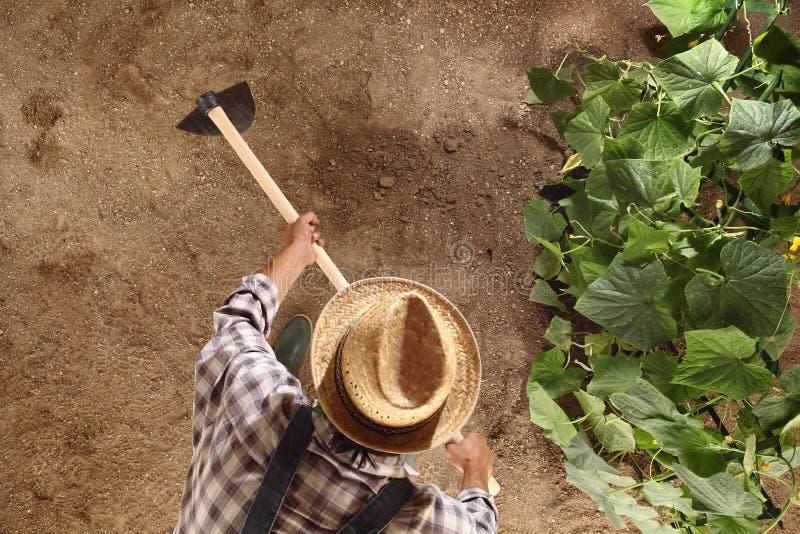 Sirva al granjero que trabaja con la azada en el huerto, azadonando el suelo imagenes de archivo