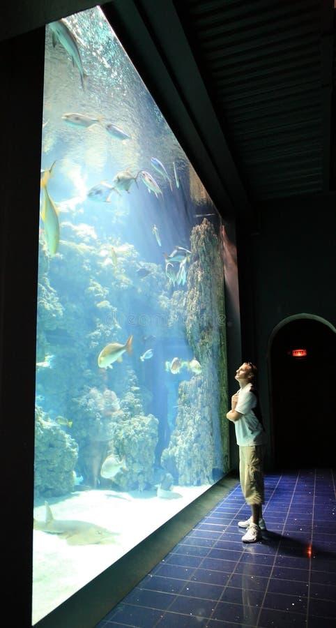 Sirva cerca del acuario con los pescados en el museo oceanográfico Mónaco fotografía de archivo libre de regalías