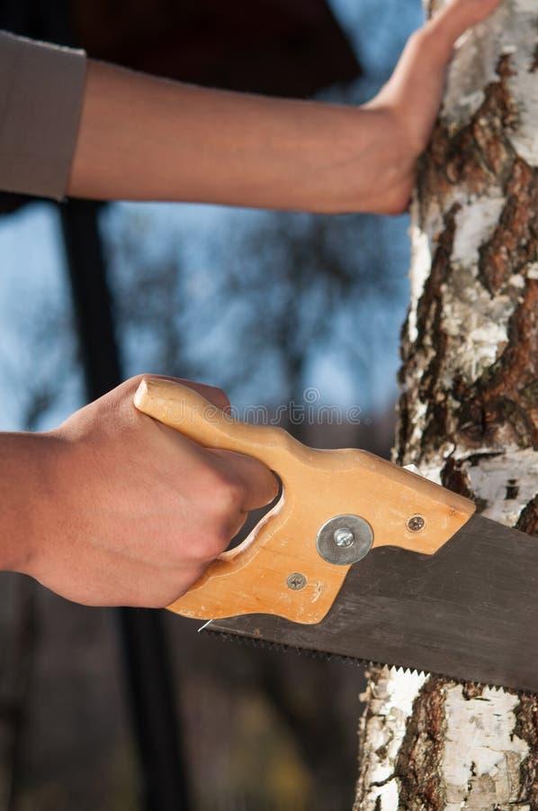 Sirva cortar la rama de un árbol con vio imagen de archivo libre de regalías