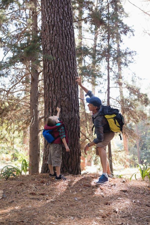 Sirva destacar por el muchacho que se coloca en bosque fotografía de archivo