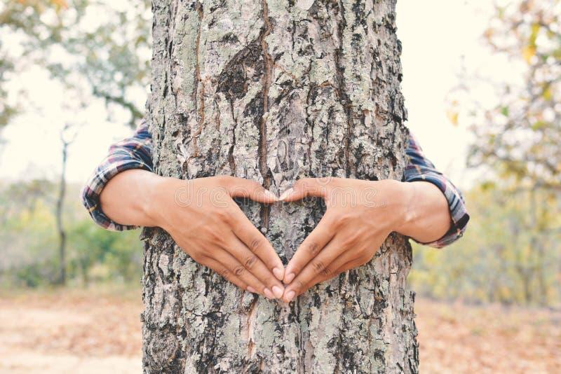 Sirva el color grande del árbol del abrazo del foco suave selectivo del tono del inconformista, estafa imagenes de archivo