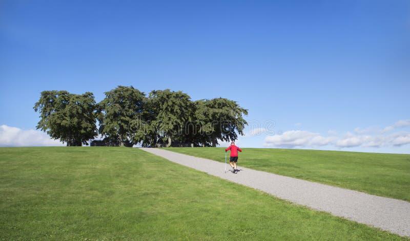 Sirva el ejercicio del nordic que camina en el camino a los olmos en el cementerio del arbolado, Estocolmo Patrimonio mundial de  fotos de archivo libres de regalías