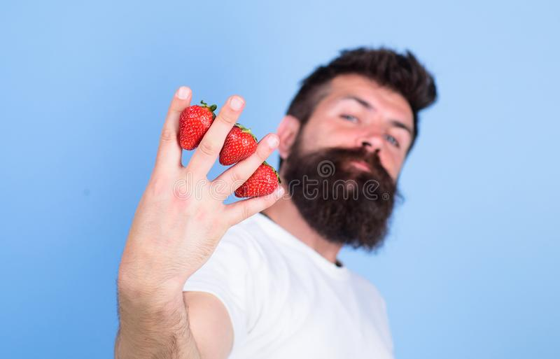 Sirva las fresas del inconformista de la barba entre el fondo del azul de los fingeres Fresa llena con los antioxidantes de la fi foto de archivo libre de regalías