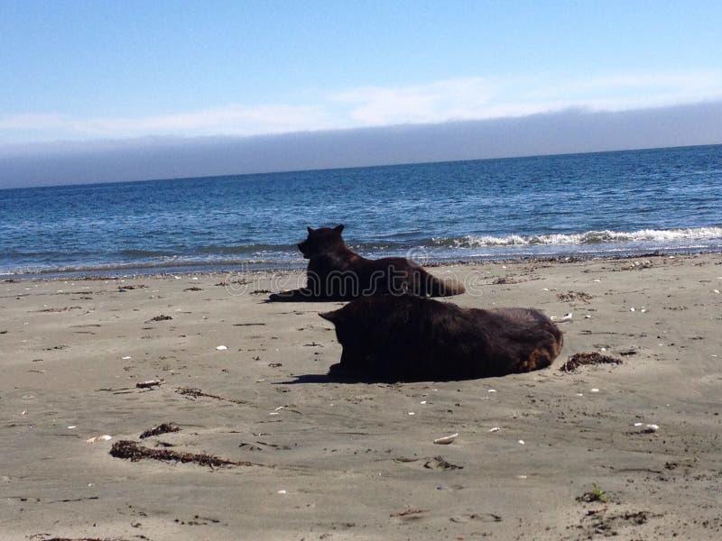 Sirve a los mejores amigos que se relajan en la playa imágenes de archivo libres de regalías