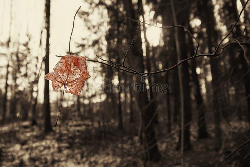 Sista blad för vintern royaltyfria foton